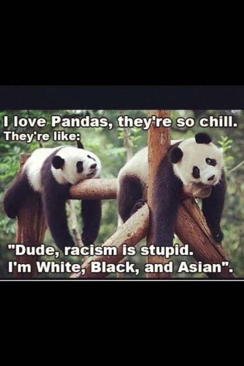 Pandas: smarter than most people! Love each other, people!!