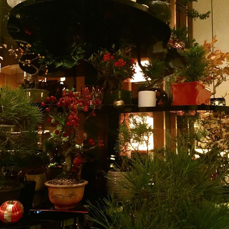 虎ノ門の「アンダーズ 東京」51階のレストラン「アンダーズ タヴァン」のクリスマスツリーは……よくみると盆栽! #婦人画報 #fujingaho  #fujingahojp  #クリスマス #クリスマスツリー  #クリスマス仕様  #クリスマスデコレーション  #アンダーズ東京  #アンダーズタヴァン  #虎ノ門ヒルズ  #虎ノ門