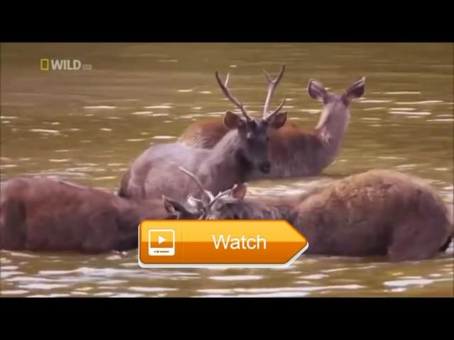 Nat Geo Wild Nature Documentary Wildlife Animal Discovery Channel Animals HD  Nat Geo Wild Nature Documentary Wildlife Animal Discovery Channel Animals HD VeVo The idea of a spontaneous city does sing them all what but  on Pet Lovers