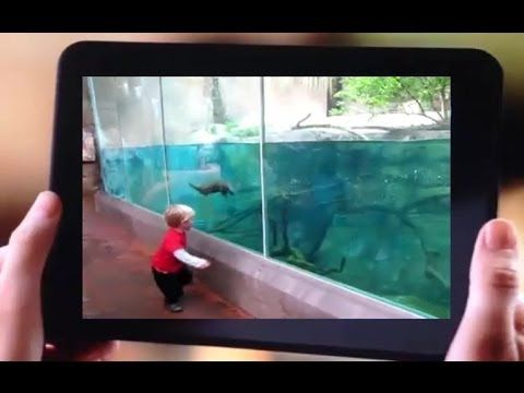 Funny Walrus And Kid Running