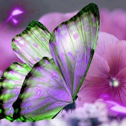 Me gustan mucho las mariposas!