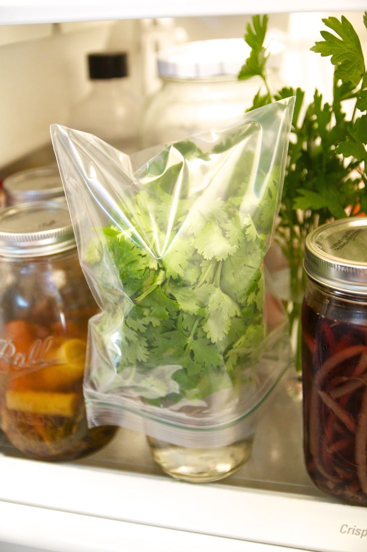 Why Freezing Is the Best Way to Preserve Cilantro — Herb Gardening 101