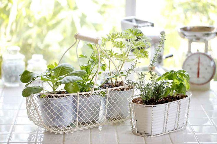 Saiba como fazer a sua própria mini-horta. Veja mais em efacil.com.br/simplifica