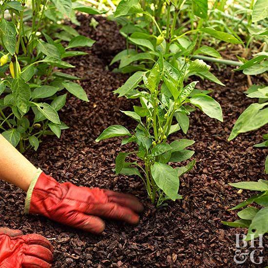 As fall progresses and temperatures drop, plants are preparing for dormancy.