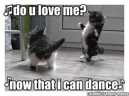 Do you love me?: Laughing, Kitty Cat, Let Dance, Funny Cat, Thrillers Kitty, Things, Kittens, Animal, Percy Jackson