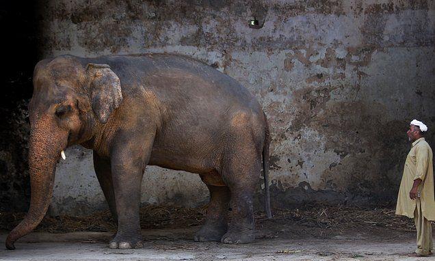 Elephant's plight sparks uproar in Pakistan