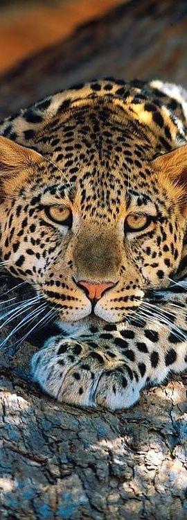 "Психолог онлайн. ""Психология личного пространства"" http://psychologieshomo.ru Look at those hypnotic eyes! Too gorgeous..."