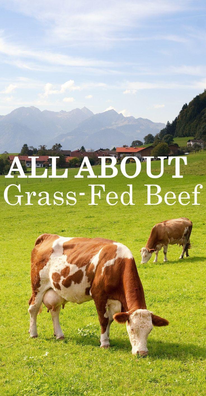 Starting a Cattle Farm – Sample Business Plan Template