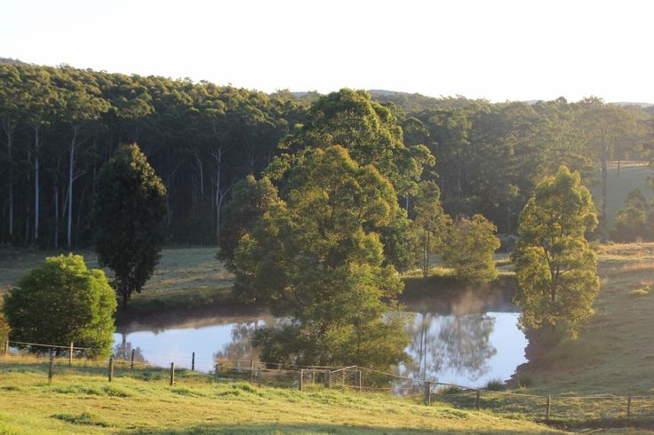 Mid North Coast equestrian haven - make a good living and enjoy life.   #NewSouthWales #MortonsCreek #ForSale #HorseProperty #RealEstate
