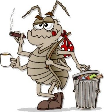 KEEP ROACHES AWAY  8 drops cypress oil 10 drops peppermint oil 1/2 cup salt water  Mix in spray bottle, shake well and spray around house in corners and in closets. Smells good but roaches hate it!! Non toxic and safe around kids and pets.
