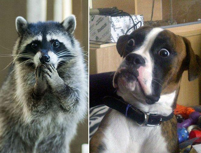 Animais Que Sem Querer Flagram Você Pelado