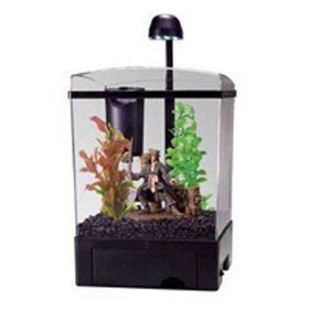 14 best just keep swimming images on pinterest fish aquariums tetra pirates caribbean aquarium kit 15gal fandeluxe Choice Image