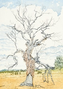 The Magdalene Tree - Kevin Foley Etching and Aquatint 2011 $730.00 Avaialble at www.cascadeprintroom.com.au