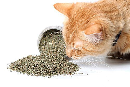 Garry's Pets Catnip - Our Maximum Potency Premium Blend Nip That Your Cats Will Go Crazy Over (3 Cups)  100% NATURAL: Freshly grown in Canada, guaranteeing highest quality with no preservatives or artificial ingredients.  HARVESTED FRESH: Planted, grown and harvested at the highest peak of season, ensuring best plant quality for essential oil.  HEALTHY: Turn your tired or old Kitten into an excited playmate with a great form of exercise!  UNIQUE EXTRACT: Proprietary herb blend will las...
