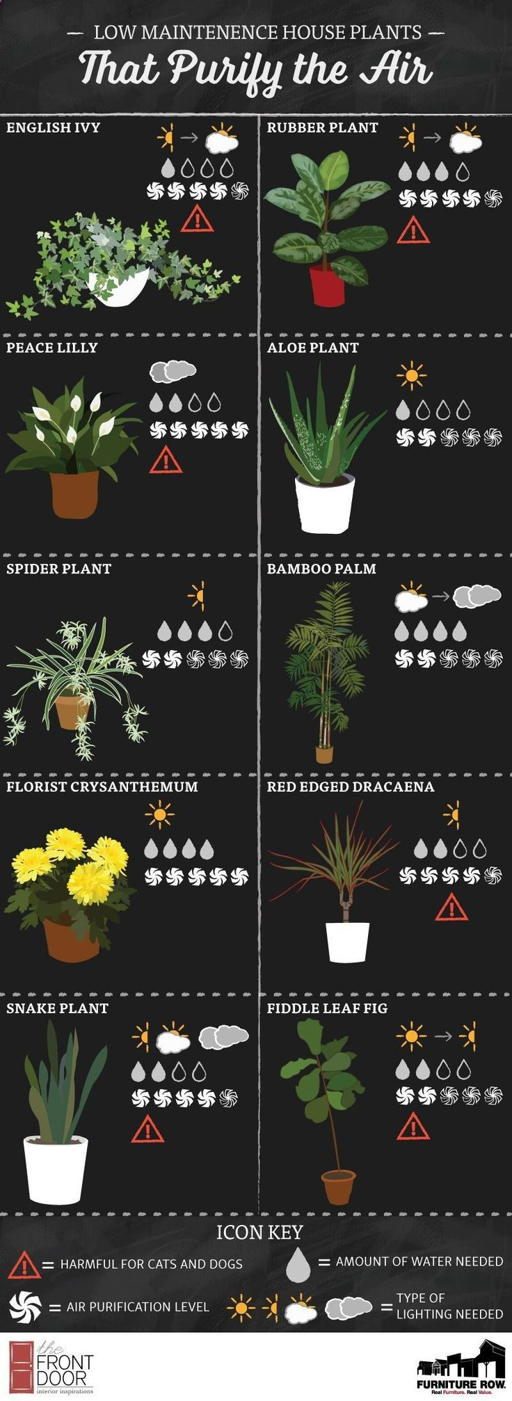 Terrace Garden - INFOGRAPHIC: Low Maintenance House Plants That Purify the Air This time, we will know how to decorate your balcony and your garden easily with plants #houseplantsairpurifying