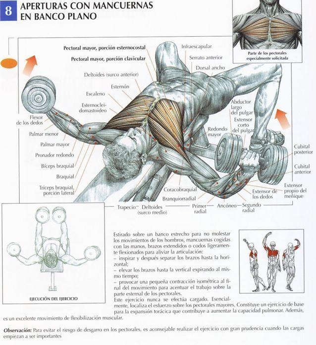 Este ejercicio  localiza el esfuerzo esencialmente sobre el pectoral mayor. Constituye un ejercicio de base para la expansión torácica que contribuye a aumentar la capacidad pulmonar. Además, es un excelente movimiento de flexibilización muscular