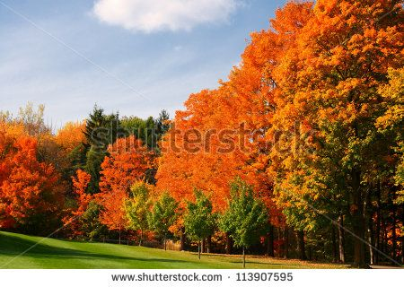 colorful autumn leaves in park - stock photo