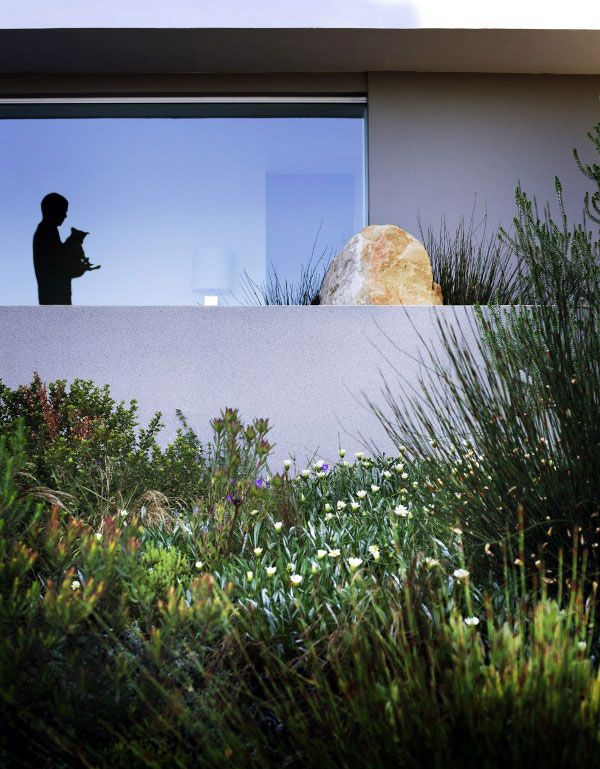 Landscaping with Fynbos - design by Carolyn Mullet