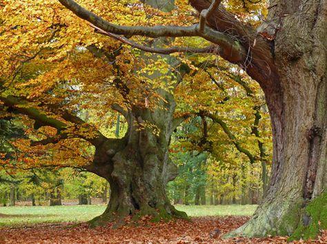 Wunderwerk Baum - Markante Bäume