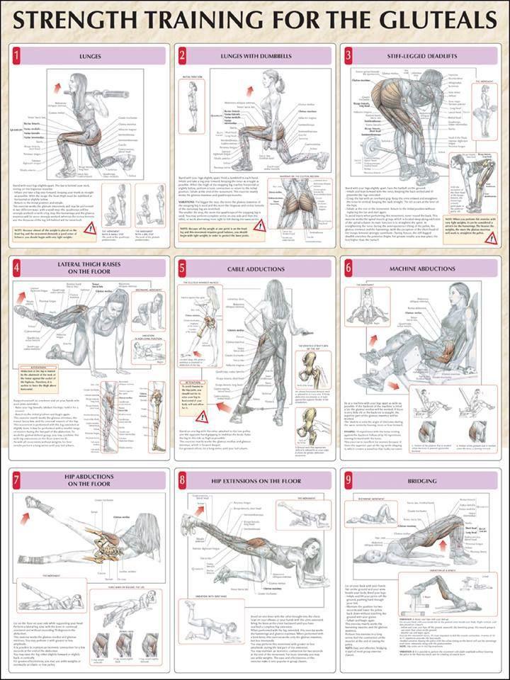 Strength Training for Glutes / Entrenamiento para fortalecimiento de los gluteos.