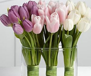 let's learn about flowers: tulip edition | planning it all