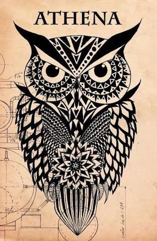 drawing athena owl - Google Search