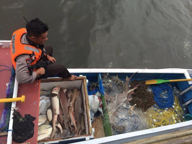 Tangkap Hiu,Nelayan Ini Diamankan