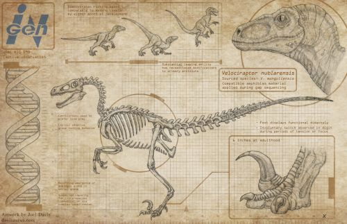 """Anatomical illustration of the Velociraptor from Jurassic Park. I've been wanting to get to this one for a while! Jurassic Park has always been my favorite movie - this whole series of orthographic illustrations owes a lot toMark """"Crash"""" McCreery's concept drawings from the film's production, which were a major inspiration for me growing up. These will be available as 11x17"""" posters at Miami Supercon next weekend!"""