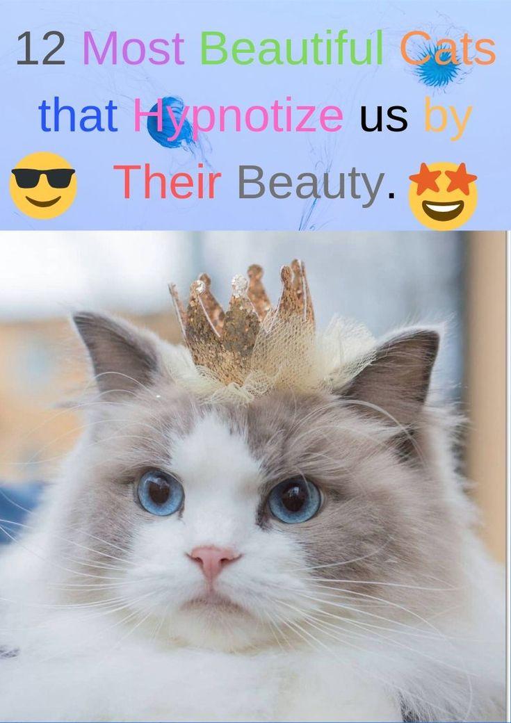 12 Die schönsten Katzen, die uns durch ihre Schönheit hypnotisieren.   – Animals and pets