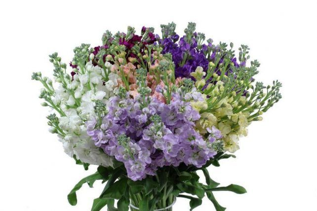 Stock Flower Assorted 10 Bunch Wholesale Flowers Bulk Flowers J R Roses Wholesale Flowers In 2020 Wholesale Flowers Stock Flower Bulk Flowers Online