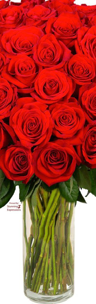 Red Roses |