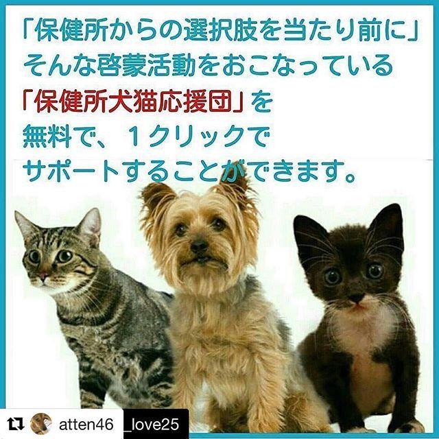 #Repost @atten46 (@get_repost) ・・・ #Repost @ritmo_po_love25 (@get_repost) ・・・ #Repost @io126oi (@get_repost) ・・・ リポストです🍀 #Repost @puyomiyu3713 (@get_repost) ・・・ 無料で、保健所の犬や猫を助けるお手伝いができます🐶😺 ❶ 私のInstagramプロフィール欄に貼ってあるリンク先から支援できます。 ❷ 「応援する」の赤いボタンを押すだけで支援完了です👍 (支援は1人1日1回まで) . この支援の方法を知ってから、私の毎日の日課になりました😊 皆さんもぜひ「保健所犬猫応援団」を応援しませんか📣 . 【動物愛護管理法 改正】の署名もご協力をお願いいたします🙇 殺処分ゼロへの近道となり、浅田美代子さんが中心となって署名活動中です。5年に1度の法改正。この機会を逃したら、再び動物たちは苦しむことになります。…
