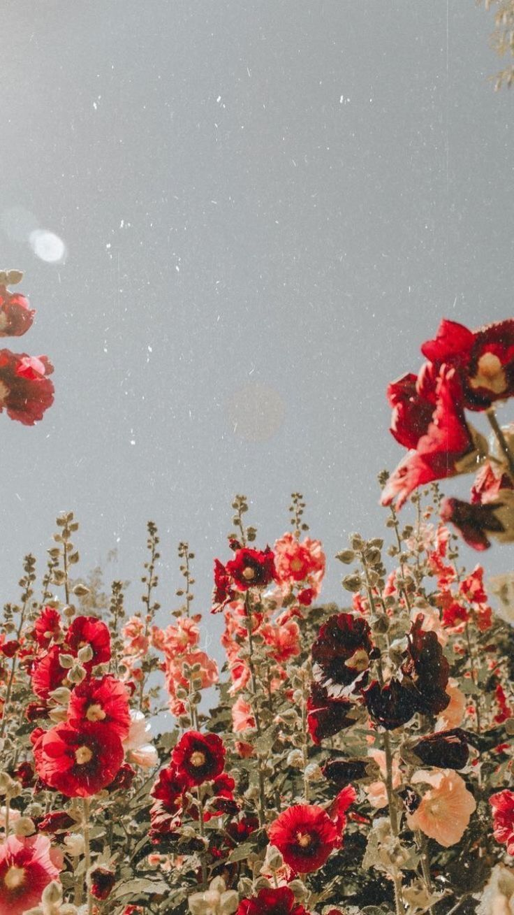 red flowers style summer
