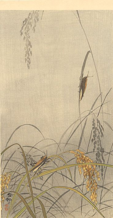 Page: Grasshoppers on Rice Plants Artist: Ohara Koson Completion Date: c.1910 Place of Creation: Japan Style: Shin-hanga Genre: wildlife painting Technique: woodblock print Material: paper Dimensions: 34.3 x 18.7 cm