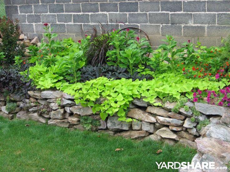 Kathy's flowers: Black & green sweet potato vine, cockscomb, lantana, petunia.