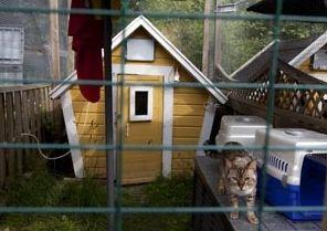 Hammarby kattpensionat Tumba