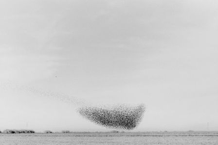 Lukas Felzmann - Swarm