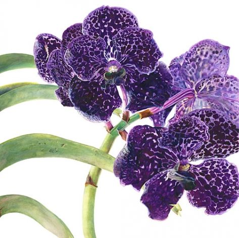 Vanda Orchid Diptych 1.