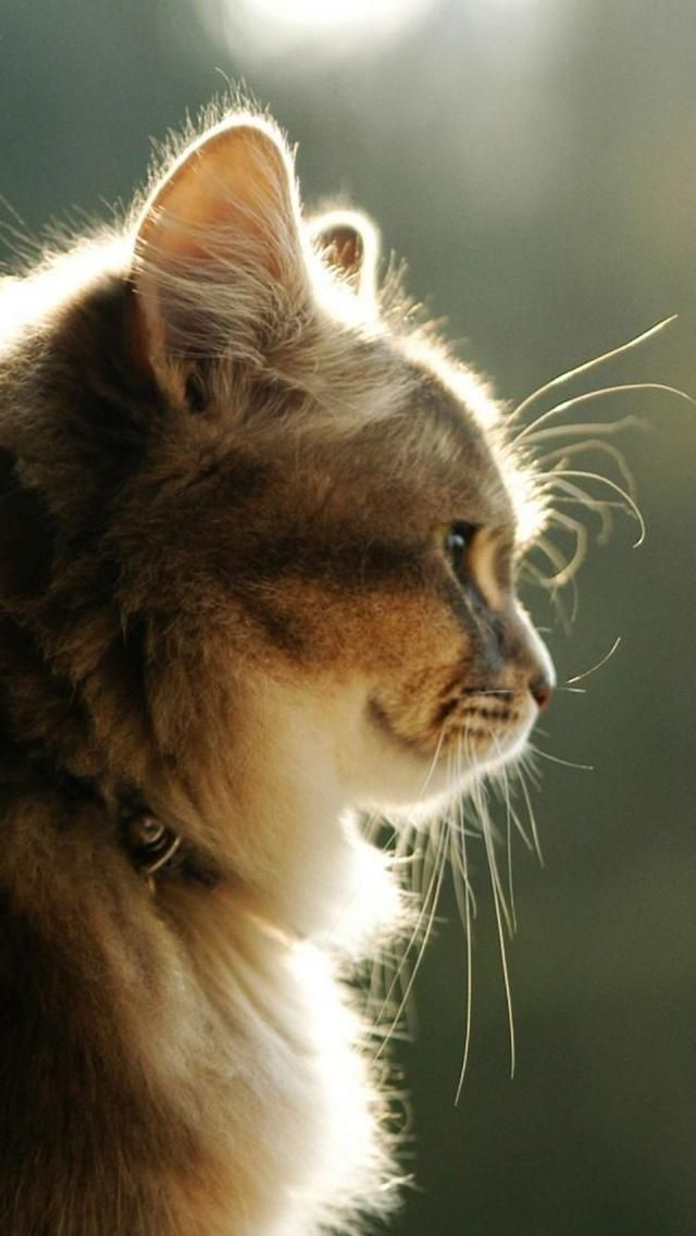 So perfectly still, majestic, beautiful, and let's not forget soft and furry! ... a cat, pure love.