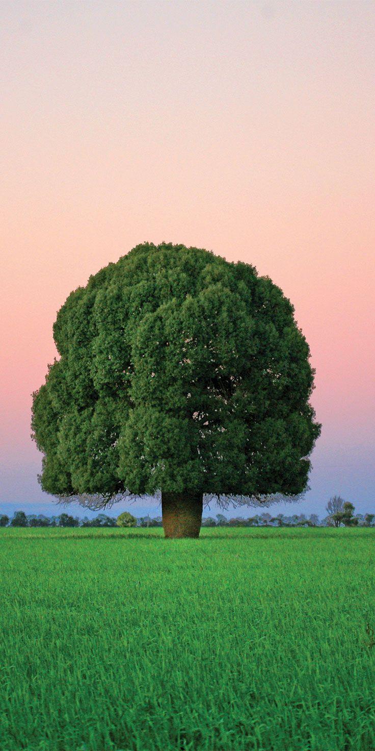 Bottle Tree in Condamine - by @visitqueensland