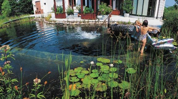 59 best images about garden swimming lakes on pinterest for Pool design new zealand