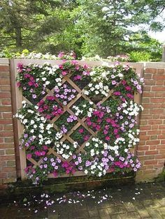 Impatiens love the shade. This is a cool way to display them. Chicago Botanic Gardens | BGVJ