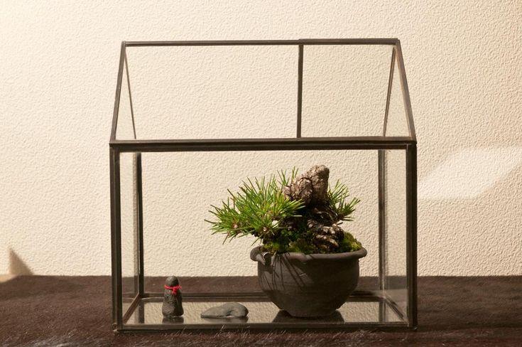『うちには和室がないので盆栽を飾る時はあまりセオリーにはとらわれず自由な感じで楽しんでます(^_^;)』Kさんが投稿した黒松,盆栽,盆栽のある暮らしコンテストの画像です。 (2017月1月16日)