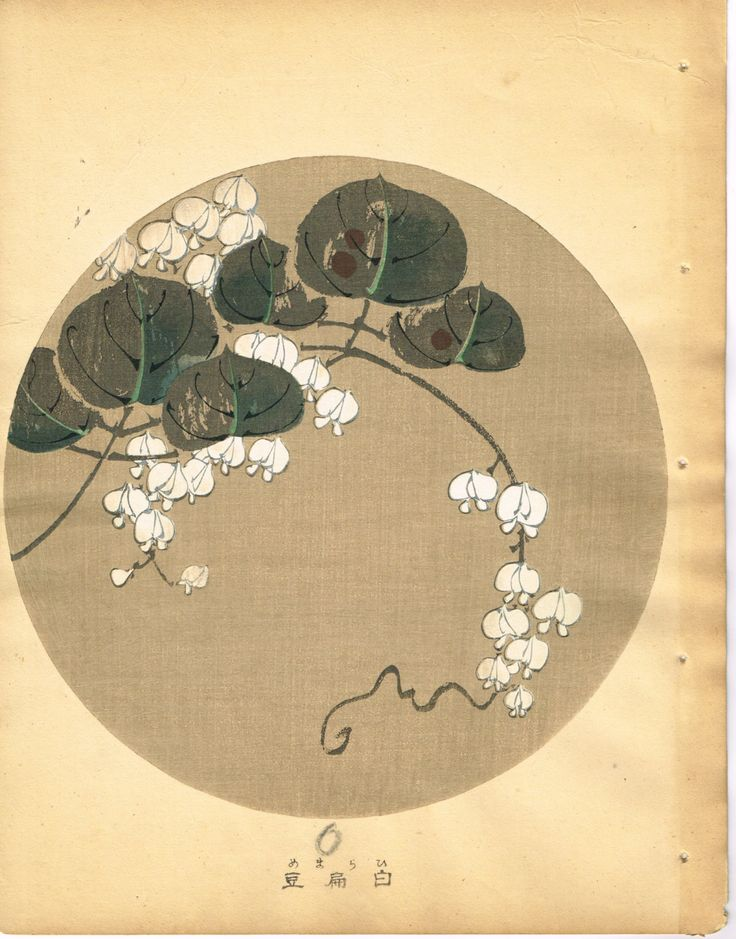 "Japanese antique woodblock print. ITŌ Jakuchū 伊藤 若冲 (1716-1800) ""Lentil from Jakuchu gafu"""