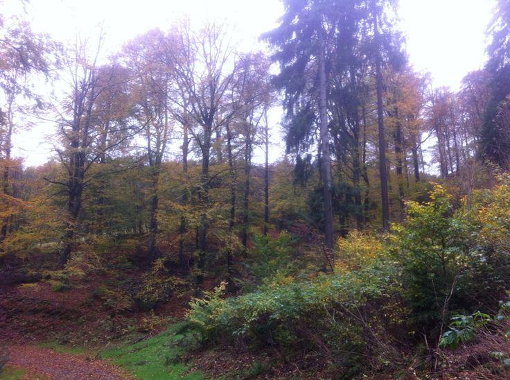 Herfst in Sauerland (Willingen)