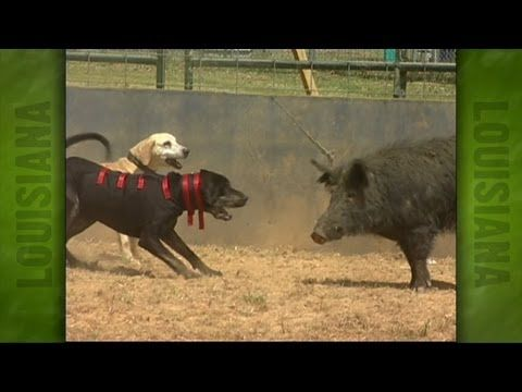 Uncle Earl's Hog Dog Trials