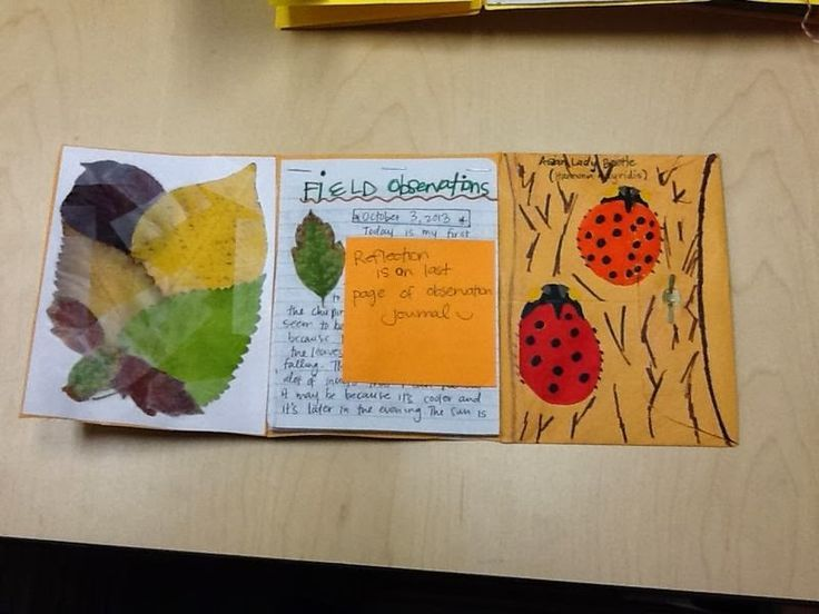 Teaching Science With Lynda: Envelopes and All The Cool Things You Can Do With Them! With Free Interactive Notebook Template!