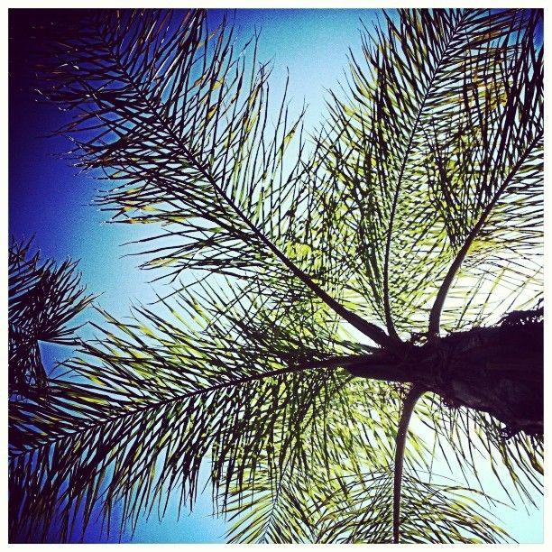 #piscina #palmera #palm #sky #up #cielo #relax ©www.aunioncreatividad.com