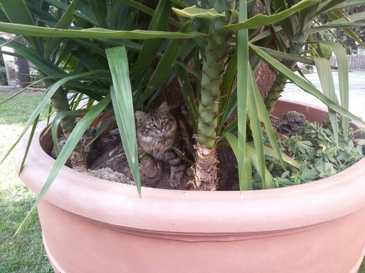 Trova l'intruso :-)