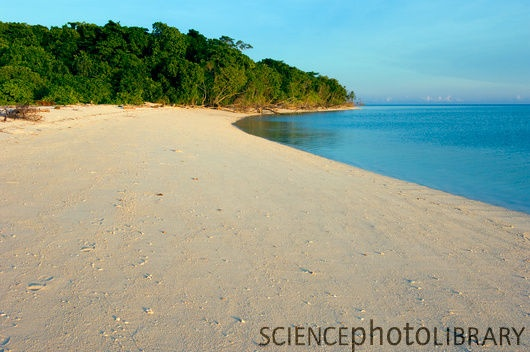 Green Turtle Nesting Beach on Sangalaki Island - Indonesia (East Borneo)